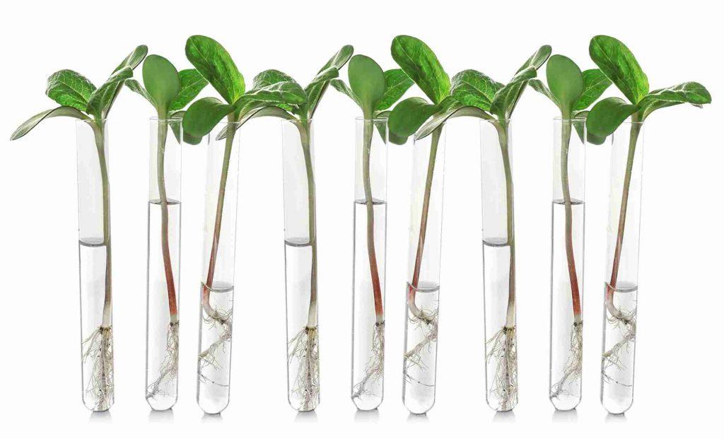 jeunes plants dans des tubes à essai
