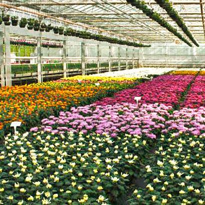 pépinière de fleurs