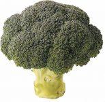le brocoli sica