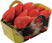 les fraises de la Sica