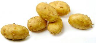 La pomme de terre primeur Sica