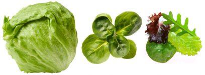 différents types de salades sica