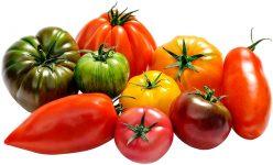 tomate-saveurs-antan