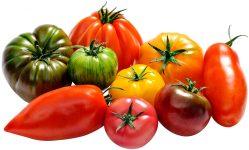 les tomates de diversification de la Sica